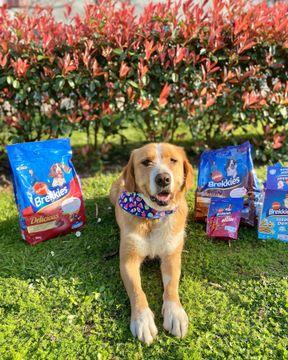 Holaaa!! Quería enseñaros lo que nos llegó de parte de brekkies_es por ser los #influenkkies de este mes!!!😍Por ahora hemos probado las chuches de bacon para sacar la foto y, como veis conseguimos foto mirando a cámara que ya es difícil😂Muchísimas gracias brekkies_es por los regalos!!🐶🤤💗....#dog#influenkkies #breakkies #influencer #doginfluencers #dogsofinstagram #dogmodell2021 #doglovers #doglife #dogoftheday #doglove #dogsofinsta