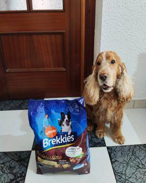 🇪🇸Ya ha llegado mi comida!!!! Tenderissimo de brekkies_es es el mejor pienso del mundo!!Está blandito y eso es muy importante para mí, pues soy un abuelito y me falta algún dientecillo 😅 y por supuest... ESTÁ RIQUÍSIMO!! 😋🇬🇧My food has arrived !!!! Tenderissimo from brekkies_es is the best feed in the world !! It is soft and that is very important to me, because I am a grandfather and I am missing a few teeth 😅 and of course ... IT IS DELICIOUS !! 😋#influenkkies #cockerspainel #cockerspanielspain #cockerlove #cockerlife #cockerlife #cockerguapo #cockerspanielespaña #cockerlovers #cockerespaña #cockerworld #cockerspanielworld #cockerspanielsofinstagram #cockerdream #instacocker #instacockerspaniel #perreteguapo😍 #cockercanela