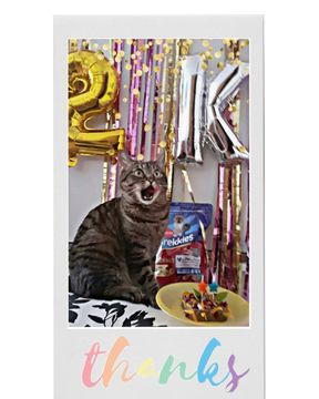 Thanks my furriends for 2k !!!❤💖❤💖❤💖 #2k #loveyou #thanks