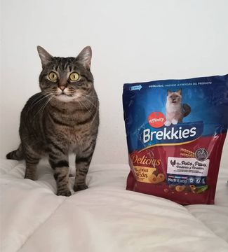 Whats your favourite food?!! 😊👆 Mine is brekkies_es!! 😍♥️