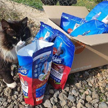 Amiguis!!! Estoy flipando!! Mirad qué súper premio me han enviado de brekkies_es por ser el #influenkkies del mes de enero!😻😻😻😻😻😻😻No he podido resistirme! Los pruebo todos y luego os digo cual es mi favorito!Que tengáis buen #miércolesdecosasbonitas clio_albondiguita❤💜💚❤💜💚❤💜💚#gatos #gatosfelices #gatosespaña #gatosdeinstagram #catlover #catsofinstagram #catsofworld #catlife #cat #mascotasfelices #animales #animalslover #animals #adoptdontshop #nocompresadopta