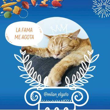 Gracias brekkies_es por escogerme como #influenkkies del mes 😸😸😸 Me hace muchísima ilusión!!! Estoy súper contento!!! Os invito a todos a pasar por el perfil de brekkies_es, igual eres el próximo #influenkkies🐾🐾🔒 Guardando este post me das apoyo en Instagram 😽🐾#cosasdegatos #cat #gato #catsofinstagram #catlover #catlife #catlovers #catoftheday #gatosdeinstagram #gatonaranja #tabbycat  #comuneuropeo #redcat #gatoslindos #catofinstagram #instacat #catgram #instatabby #gingercatsrule #gingercat #gingercatsarethebest #gingercatsofinstagram #gingercatsrock #kattenvaninstagram #catstagramcat #purrfect #meow #happycat #meowfeature #influenkkies