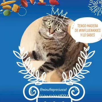 Gracias brekkies_es por escogerme #influenkkies del mes estoy muy contenta y agradecida de poder de disfrutar de estos momentos con vosotros ,furriends dont forgot to checkout the profile of brekkies_es and be the #influenkkies of the month!!🥳❤️🥰😍#cat #gato #gabadora #influenkkies#influencer #agradecida🙏